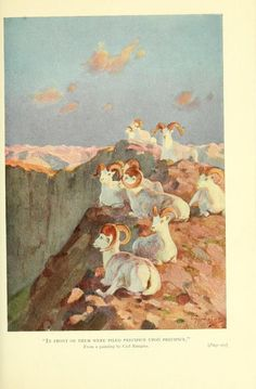 The Wilderness of the Upper Yukon: A hunter's explorations for wild sheep in sub-arctic mountains, Charles Sheldon, 1911.