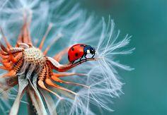 Macro Photography Ladybug PicMonkey