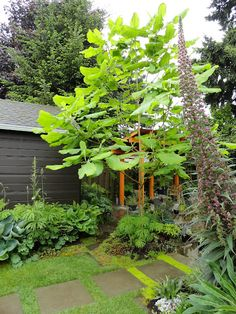 Gorgeous transformation and inspiration!    danger garden: Staying put pays off...