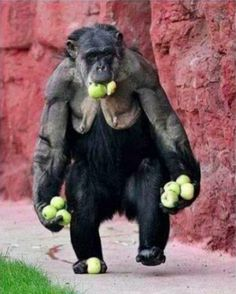 funny monkey picture