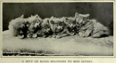 How England's First Feline Show Countered Victorian Snobbery About Cats | Atlas Obscura