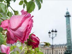 En 2012, pour fêter les 20 ans de la rose Yves Piaget, la maison a lancé une collection de bijoux, dessinant en or et diamants les traits de cette grande beauté florale. #piaget #joaillerie