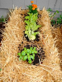 Straw Bale Urban Gardening ~ Ideas and Getting Started | Deep Roots at Home