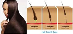 Do you know that Hair growth is not a continuous process but it has three phases ? It's essential to understand the hair growth cycle in order to recognize and understand many of the problems you can encounter with your hair. The hair growth cycle consists of three distinct stages – anagen, catagen and telogen. double tap to read more