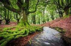 <strong>Floresta Otzarreta (Espanha):</strong>A névoa que costuma ser comum nesta floresta, localizada no País Basco, lhe confere um ar misterioso (Foto: Pinterest).