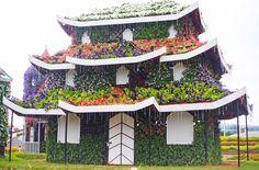 Miracle Garden, Dubai - Camille Tries To Blog