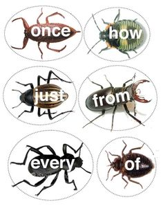 FREE!  Here is a simple sight word game that my students ABSOLUTELY LOVE!! Sight words are written on realistic looking bugs. Students compete to