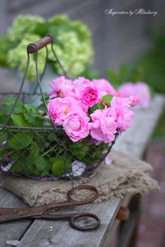 Baskets like this are so useful for gathering vegetables and flowers.
