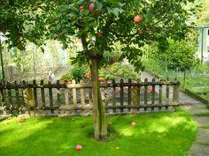 PAM - appelboom in een tuin