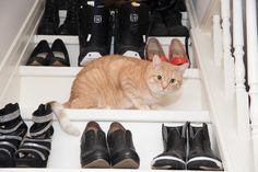 Cat people are hip and stylish with the addition of flare courtesy of the felines in their lives. Of course, if the cat is an orange tabby, the cool factor is even greater.
