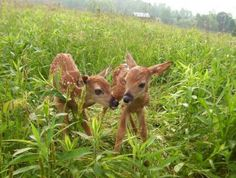 Cute Baby Animals   Living the Country Life