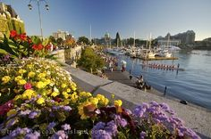 Picture of Picture of the waterfront in downtown Victoria, a popular vacation destination in British Columbia.