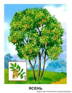 Easy Canvas Art, Flower Names, Preschool Learning Activities, Montessori Materials, Color Pencil Art, Colored Pencils, National Parks, Herbs, Clip Art