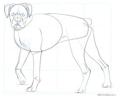 Drawing Human Anatomy How to draw a boxer dog step by step. Drawing tutorials for kids and beginners. Human Figure Drawing, Figure Drawing Reference, Anatomy Reference, Dog Drawing Simple, Boxer Dogs, Boxers, Drawing Tutorials For Kids, Dog Steps, Dog Paintings