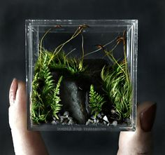 A larger version of our mini refrigerator magnet. The clear vessel is filled with fresh mosses and stones to simulate a miniature landscape. Sticks securely to virtually any metal surface. Features: • Measures 2 tall x 2 wide x 0.5 thick • Includes plants shown; no assembly required • Easy care; no sun/fertilizer required • Comes with detailed plant care instructions  ♥ SHIPPING INFORMATION ♥  All items are handmade and packaged by me and orders are generally processed and shipped in the…