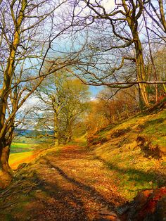 Delicious autumn! My very soul is wedded to it, and if I were a bird I would fly about the earth seeking the successive autumns. George Eliot (Mary Anne Evans--Welsh ancestry) woodland path in Llansilin, Wales