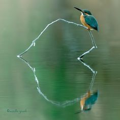 I LOVE love love this natural Heart illusion in Nature! Beautiful blue bird reflection
