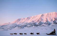 Go dog-sledding in Svalbard, Norway
