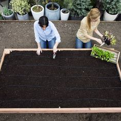 Raised garden... get rid of the mulch beds and use recycled plastic as mulch.  No termites or ants!