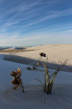 50people50places:  White Sands National Park, New Mexico