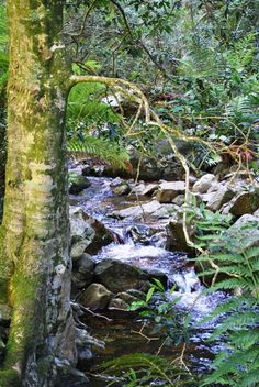 Greyton nature reserve - a hiking paradise. Clean water, clean air, no noise pollution. Noise Pollution, Water Systems, My Land, Nature Reserve, Cape Town, Wander, South Africa, Mystic, Exploring
