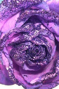 Beautiful purple Rose - Flowers Wallpaper ID 1040375 - Desktop Nexus Nature Purple Love, All Things Purple, Purple Lilac, Purple Glitter, Purple Rain, Shades Of Purple, Deep Purple, Purple Roses Wallpaper, Orchid Wallpaper
