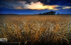 Fields of gold by Bob_Bittner - Tagged by Mak Khalaf