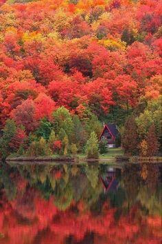 Beautiful reds