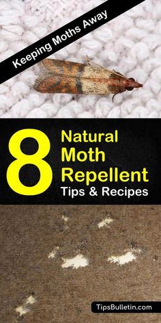 For all you anti-moth people out there come to learn how to get rid of them with all natural moth repellent using essential oils. Learn how to make your own lavender sachets for drawers and closets. Natural Moth Repellant, Moth Repellent, Moths In Closet, Essential Oil Spray, Essential Oils, Moths In House, Getting Rid Of Moths, Diy Pest Control, Bug Control
