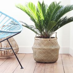 Panier boule Seagrass basket chez Bird on the wire www. House Plants Decor, Plant Decor, Indoor Flowers, Indoor Plants, Decoration Plante, Interior Plants, Gras, Home And Deco, Planting Flowers