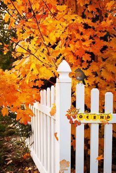 Autumn Around the Fence animated autumn leaves fall gif autumn pics fall pics