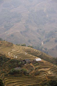paddy field (Sa Pa - vietnam)