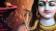 Najgrozniejsze Zwierzeta Swiata   Indie 2012 PL