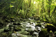 @Belinda Greb beautiful #photography of #stream called sanctuary stream #nature