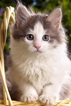 cutest cats........HOW COULD ONE NOT FALL IN LOVE WITH SOMETHING THIS ADORABLE ??.................ccp