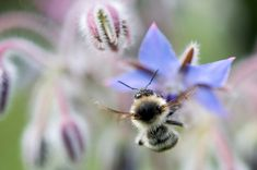 """Sterben die Insekten, stirbt der Mensch. Noch summt, flattert und schwirrt es bei uns auf den Blumenwiesen. Wildbienen, Schmetterlinge, Schwebefliegen und Käfer sorgen für die Bestäubung der Pflanzen. Die Bestände schwinden aber. 16 Wildbienenarten im Land Salzburg sind vom Aussterben bedroht. Spezielle """"Wildbestäuber-Kurse"""" sollen dem entgegenwirken."""