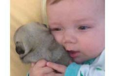 A Baby Playing With Pug Puppies Is Literally The Cutest Thing On The Internet