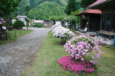 2011 June お堂前のつつじと芝桜