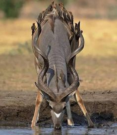 Rony: The founder of the family of deer carvidae is mammals. Nature Animals, Animals And Pets, Baby Animals, Funny Animals, Cute Animals, Wildlife Nature, Beautiful Creatures, Animals Beautiful, Beautiful Smile