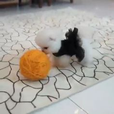 Baby Animals Super Cute, Cute Baby Dogs, Cute Funny Dogs, Cute Little Animals, Cute Funny Animals, Cute Cats, Cute White Puppies, Cute Dogs And Puppies, Happy Animals