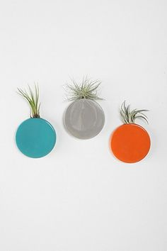 Dot Wall Vase · Wall PocketsAir PlantsUrban ...