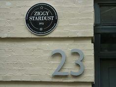 ziggy 23