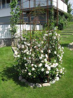 Hallontrollets trädgård: augusti 2013 Backyard Garden Landscape, Backyard Pergola, Garden Spaces, Beddinge, Chlorophytum, Narrow Garden, Privacy Plants, Growing Gardens, Garden Deco