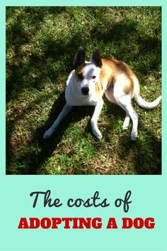 Wondering how much it costs to adopt a dog? Pets can be a time and money suck but they're worth every cent. Here's how much it cost to rescue our first dog from the SPCA.