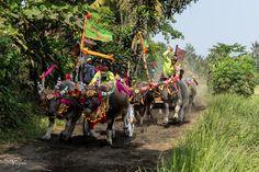 Makepung à Bali