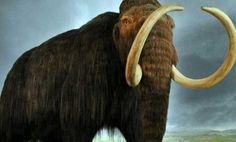 تفسير حلم الفيل في المنام Elephant Animals Horses