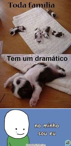 Mds q vdd Animals And Pets, Funny Animals, Cute Animals, Wtf Funny, Funny Jokes, Little Memes, Rocket Raccoon, Cool Pets, Really Funny