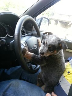 """""""I have no idea what I'm doing."""" BABY ACD!!! OMG!!! ♥"""