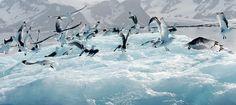 Compagnie du Ponant Yacht Cruises- North Pole cruzeiros@jamesrawes.pt