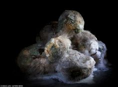 The circle of life: A pile of potatoes gradually disintegrates into one mass of ooze and mould
